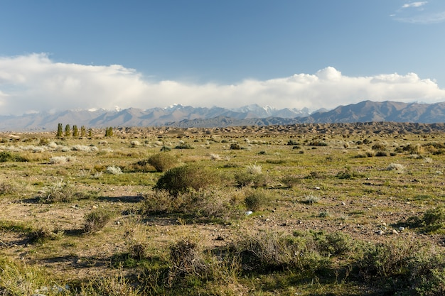 Pasto nas montanhas