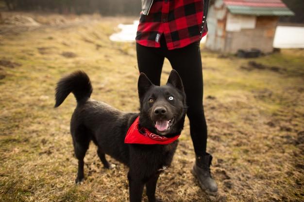 Pastor alemão cachorro andando no campo com sua amante