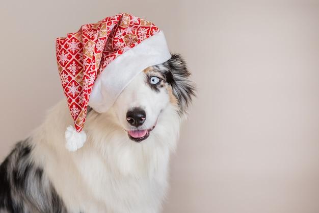 Pastor australiano em retrato closeup de chapéu de natal