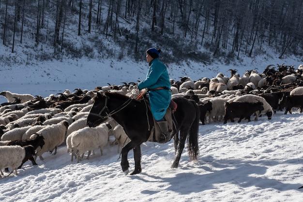 Pastor de menina sentada no cavalo e pastorear o rebanho de ovelhas na pradaria com montanhas cobertas de neve no fundo