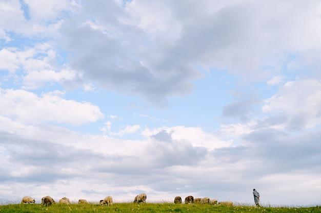 Pastor e rebanho de ovelhas pastando epicamente contra o céu azul com nuvens