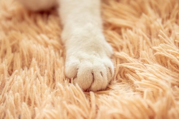 Pata branca do gato na ideia macia do feriado da sensação da cama.