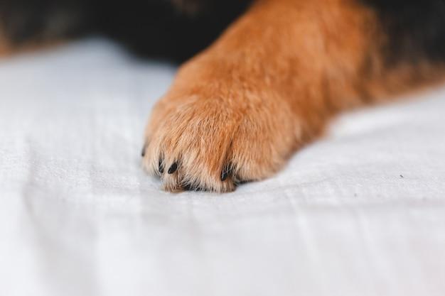 Pata de cachorro de perto