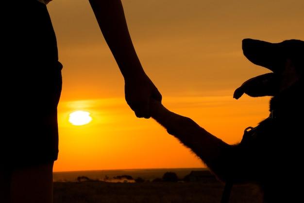 Pata de cachorro e mão humana apertando a mão