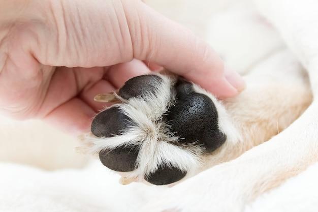 Pata de cachorro no tópico de cuidados com animais de estimação.