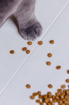 Pata de gato no fundo branco com comida