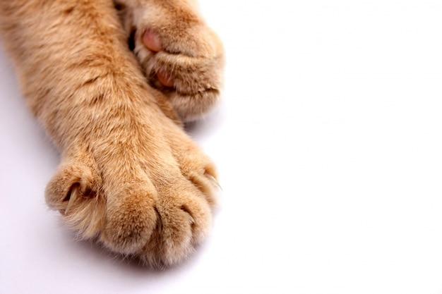 Pata de um gato vermelho com garras close-up sobre um fundo branco.