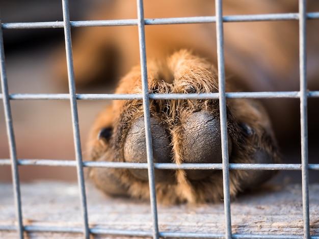 Pata pastor alemão nas barras da gaiola. fechar-se. foco seletivo