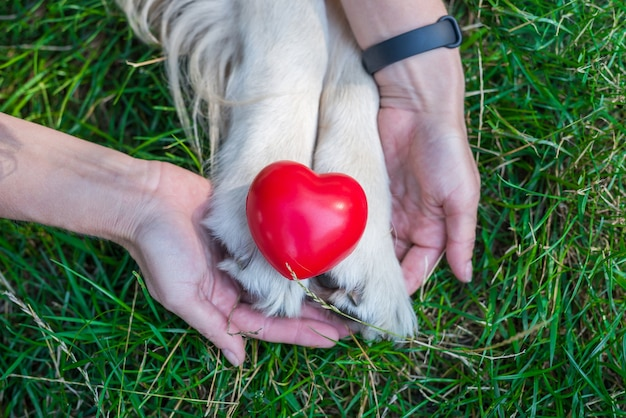 Patas de cachorro retriever, mãos da menina e coração vermelho. conceito de animais de amor
