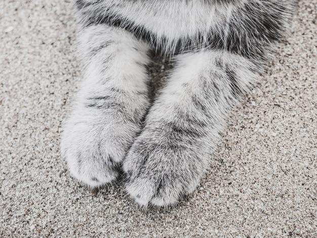 Patas de gato pequeno preto e branco