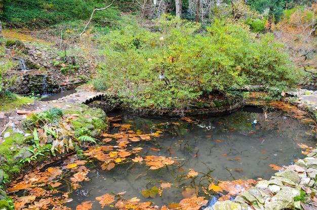 Pátio japonês no jardim botânico no outono. batumi.