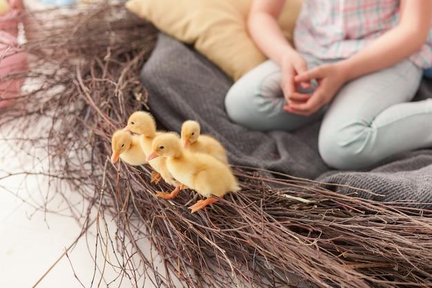 Patos de páscoa no ninho close-up vista