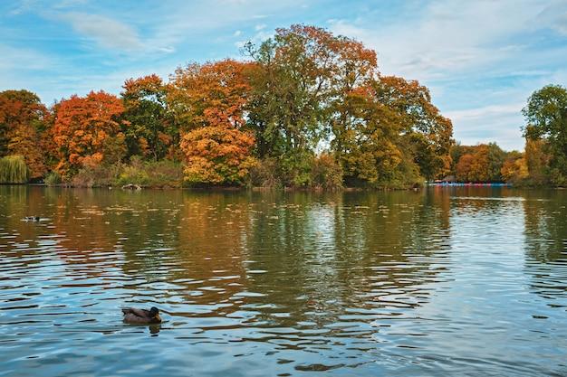 Patos em um lago em munique jardim inglês englischer garten park munchen bavaria alemanha