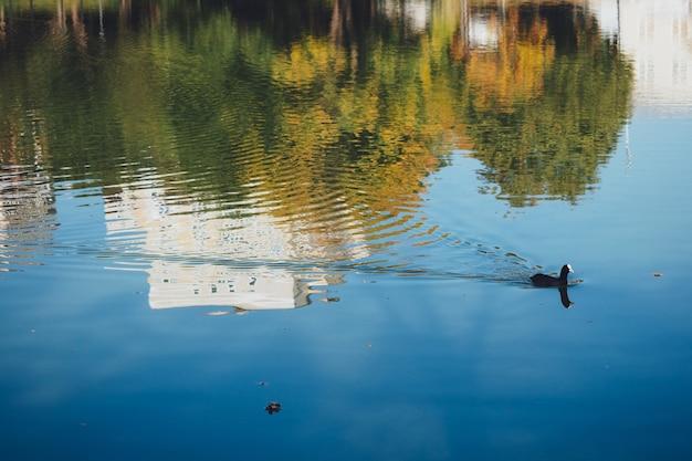 Patos nadam na lagoa da cidade. reflexo da cidade na água e a silhueta dos patos. fauna urbana.