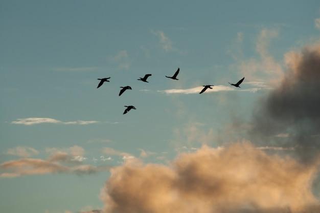 Patos, vôo, sobre, lago, de, a, madeiras, ontário
