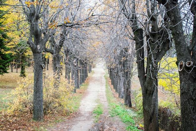 Patway entre madeiras antigas em floresta profunda
