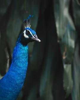 Pavão azul cercado por vegetação sob as luzes com um fundo desfocado
