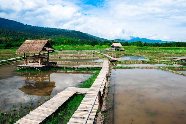 Pavilhão com telhado de colmo ao ar livre no campo de arroz