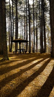 Pavilhão em uma floresta cercada por árvores altas