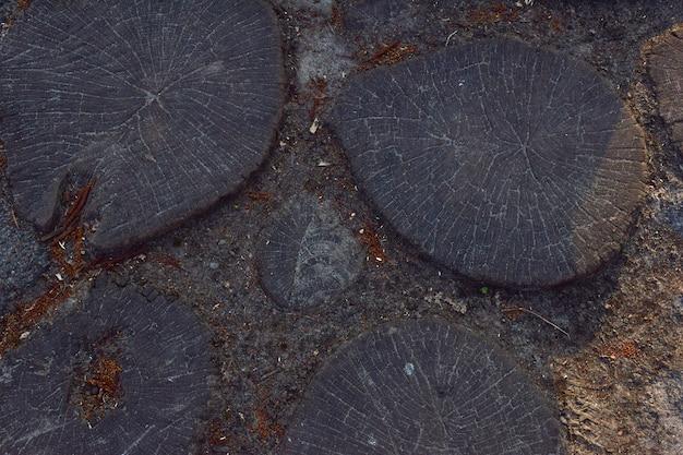 Pavimento de madeira com tocos redondos de madeira serrados cavados no solo, close-up