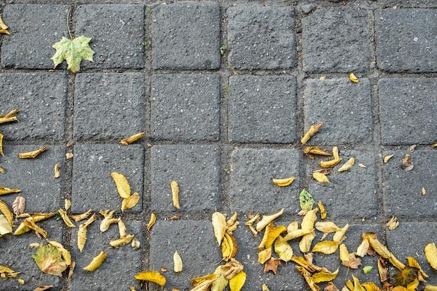 Pavimento de paralelepípedos com folhas de outono amarelas estendidas sobre ele