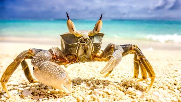 Pé de caranguejo em um resort de praia nas maldivas.