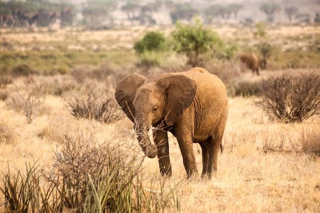Pé de elefante em um campo