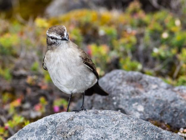 Pé de pássaro bonito em uma rocha
