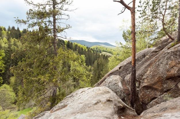 Pedaço pacífico de floresta à luz do dia