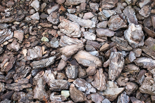 Pedaços de casca de pinheiro acarpetados na superfície da terra