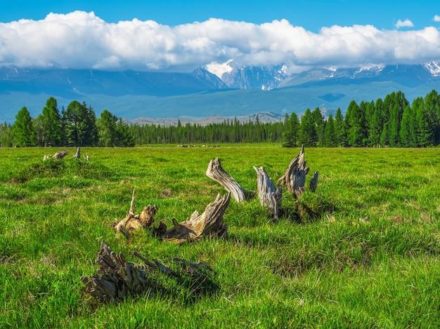 Pedaços de forma bizarra em um gramado verde. montanhas gigantes com neve acima da floresta verde em dia ensolarado. geleira sob o céu azul. incrível paisagem de montanhas nevadas da natureza majestosa.