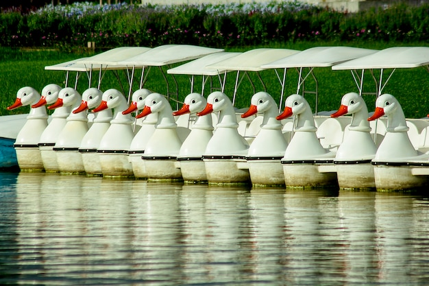 Pedalinhos flutuando na água no parque.