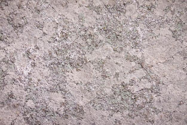 Pedra com musgo e líquenes.