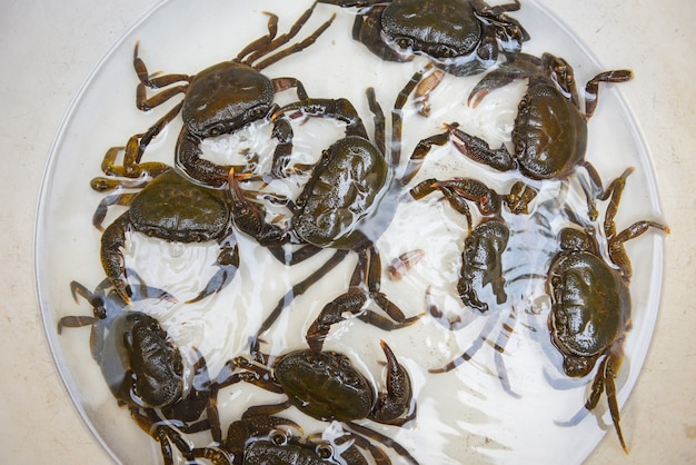Pedra de caranguejo fresco, caranguejo de água doce selvagem na água, caranguejo da floresta ou rio de caranguejo de pedra