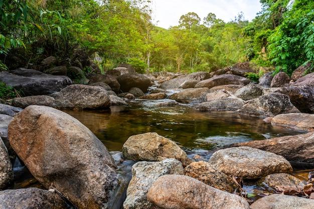 Pedra do rio e árvore colorida, vista da árvore do rio de água na floresta