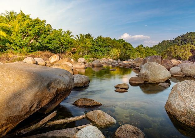 Pedra do rio e árvore com luz solar, rio de pedra na floresta