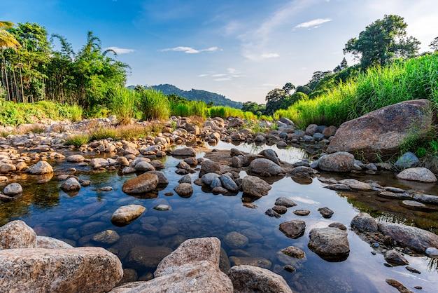 Pedra do rio e árvore, rio de pedra na folha da árvore na floresta