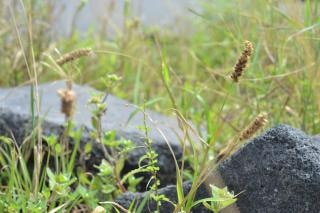 Pedra e grama