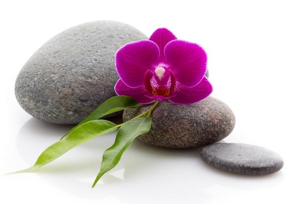 Pedras de massagem de spa e orquídea isoladas em branco