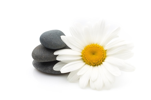 Pedras de spa e flor de margarida