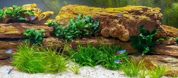 Pedras e plantas no aquário.