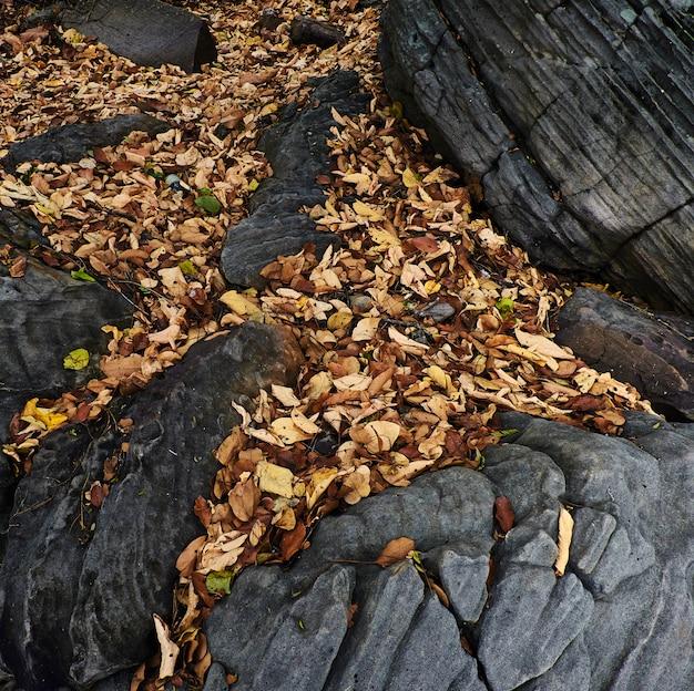 Pedras grandes e folhas de outono
