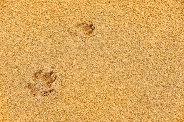 Pegada de cachorro na areia