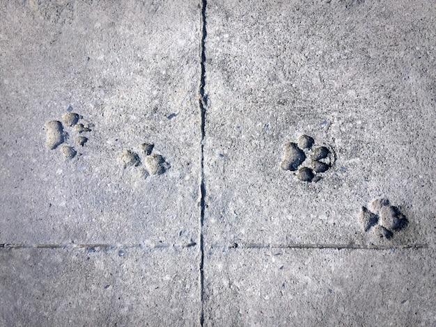 Pegada de cachorro no chão de cimento