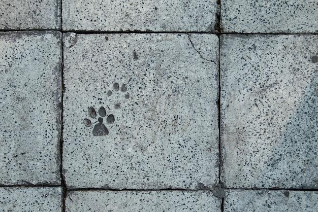Pegada de cão no bloco de cimento