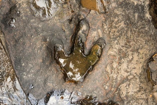 Pegada, de, dinossauro, ligado, chão, perto, fluxo, em, phu, faek, floresta nacional, parque, kalasin