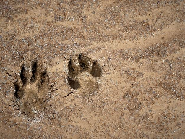 Pegada de um cachorro na areia.