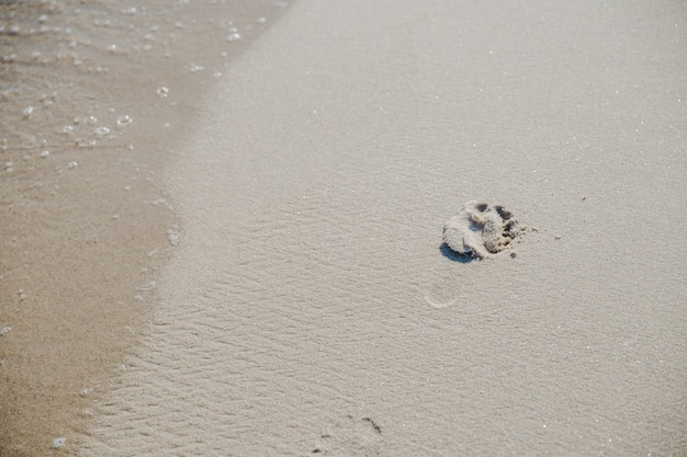 Pegada na areia na luz solar