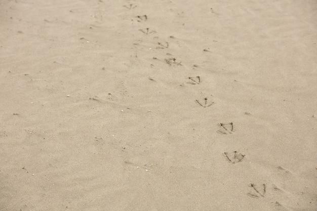 Pegadas da gaivota na praia