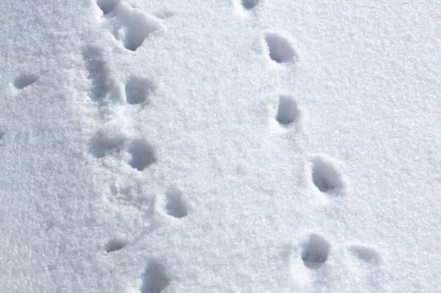 Pegadas de animais cruzam um campo de neve na diagonal, com um céu azul ao fundo. pegadas de animais na neve